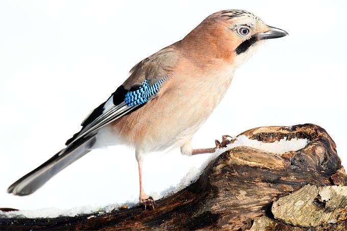 Vögel Brandenburg